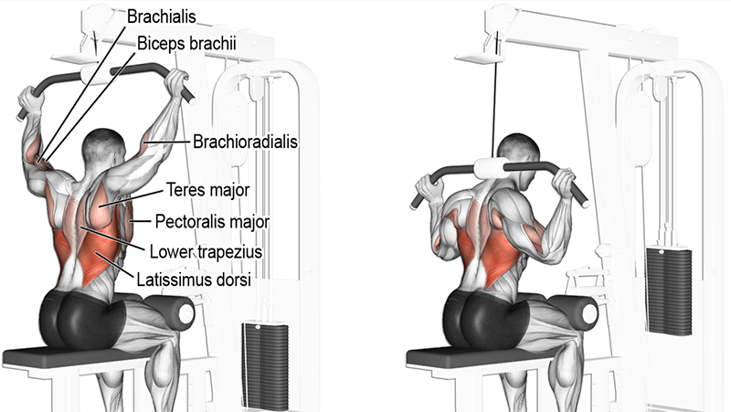 Bruce Lee lats workout behind the neck pulldown